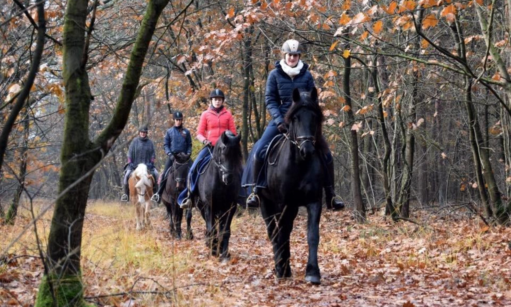 Paardenpension Verstegen